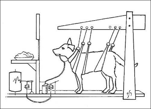 Il cane di Pavlov, illustrazione